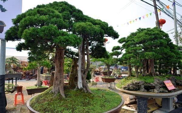 9-loai-cay-vuong-tai-loc-nen-trong-truoc-nha-4-1627448916.jpg